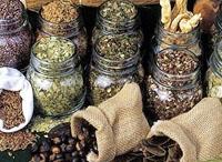 La riscoperta delle piante medicinali