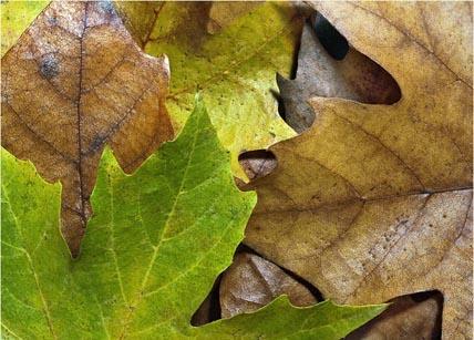 Recoaro Terme - foglie in autunno