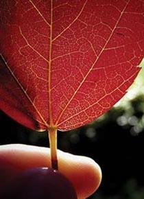 Foglie d'autunno - foliage