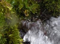 A Recoaro, quell'antica sorgente