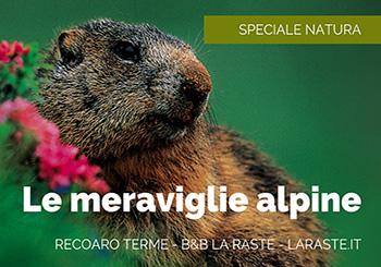 Flora e fauna alpina: cosa offre Recoaro Terme