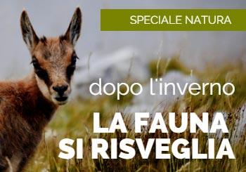 Dopo l'inverno, la fauna alpina si risveglia